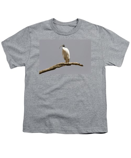 Australian White Ibis Perched Youth T-Shirt