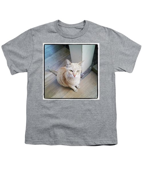 Youth T-Shirt featuring the photograph Brunch Companion. I Couldn't Resist by Mr Photojimsf