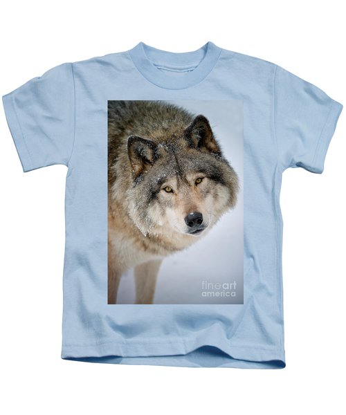 Timber Wolf Pictures 255 Kids T-Shirt