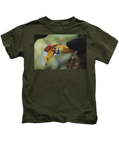 Sulawesi Red-knobbed Hornbill Male Kids T-Shirt by Tui De Roy