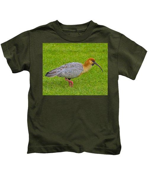 Black-faced Ibis Kids T-Shirt by Tony Beck