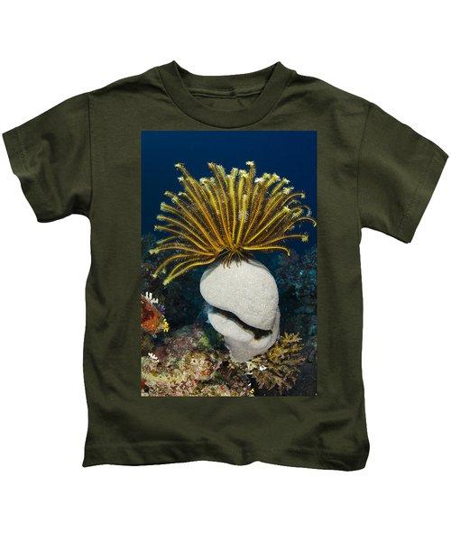 Feather Star On Rainbow Reef Fiji Kids T-Shirt
