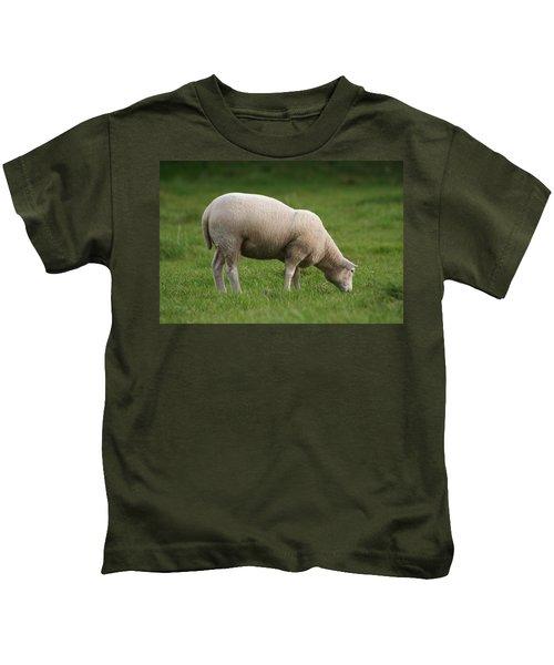 Grazing Sheep Kids T-Shirt