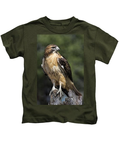 Red Tailed Hawk Kids T-Shirt