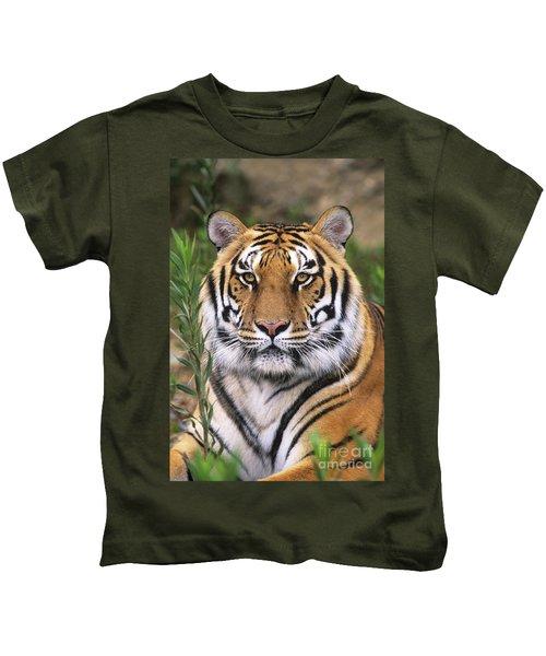 Siberian Tiger Staring Endangered Species Wildlife Rescue Kids T-Shirt