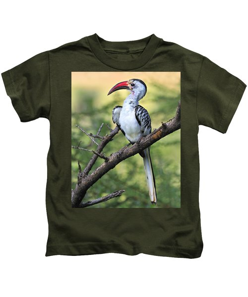 Red-billed Hornbill Kids T-Shirt by Tony Beck