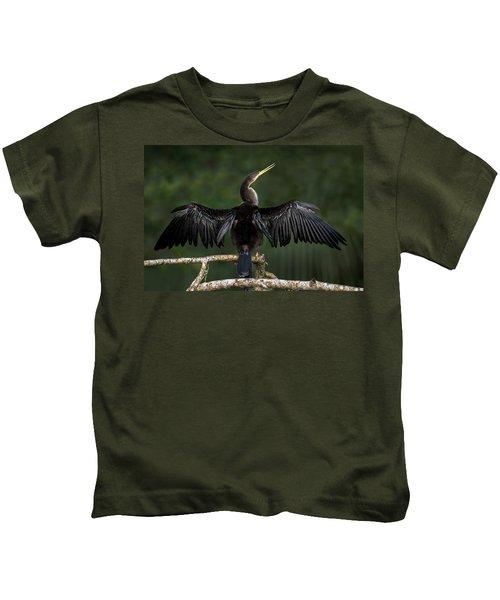 Anhinga Anhinga Anhinga Perching Kids T-Shirt by Panoramic Images