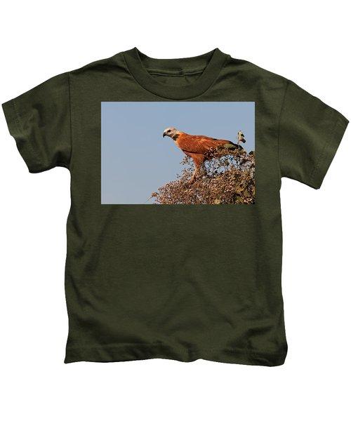 Black-collared Hawk, Pantanal Kids T-Shirt