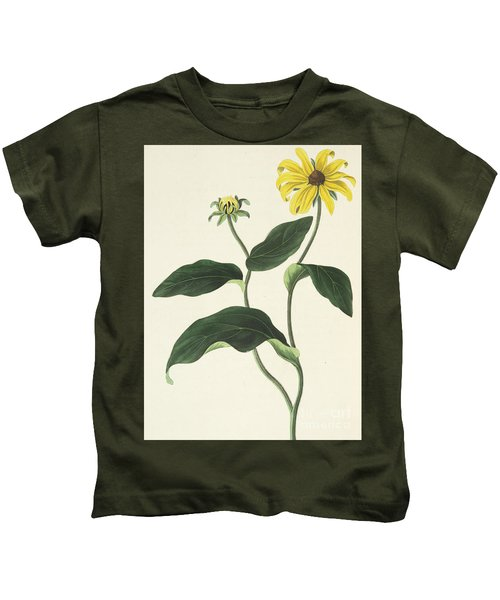 Blackeyed Susan Or Rudbeckia Hirta, Vintage Botanical Print Kids T-Shirt