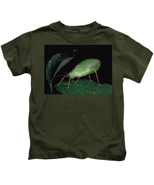 Katydid At Night Kids T-Shirt