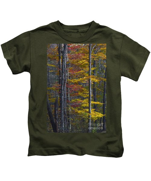 Trees With Autumn Colors 8260c Kids T-Shirt