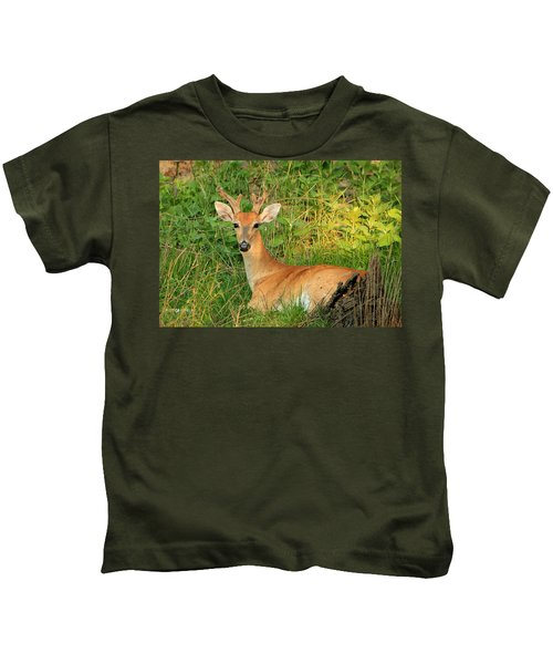 White-tail Buck Resting Kids T-Shirt