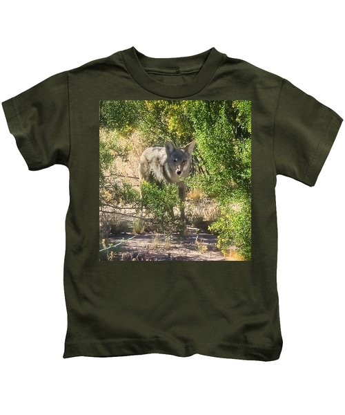 Kids T-Shirt featuring the photograph Cautious Coyote by Judy Kennedy