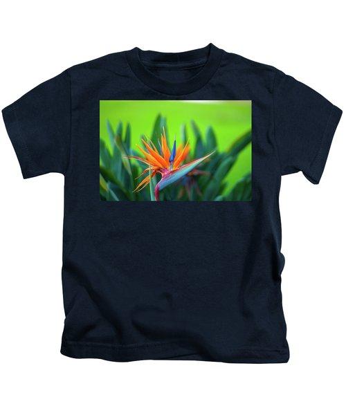 Victoria Falls Bird Of Paradise Kids T-Shirt