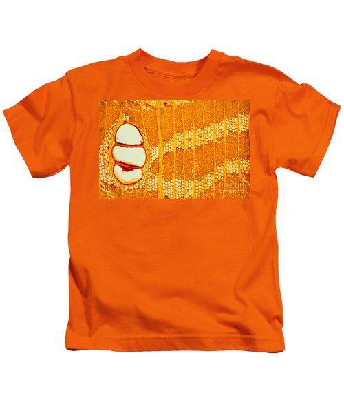 Jamaican Dogwood Vessels And Fibers Kids T-Shirt