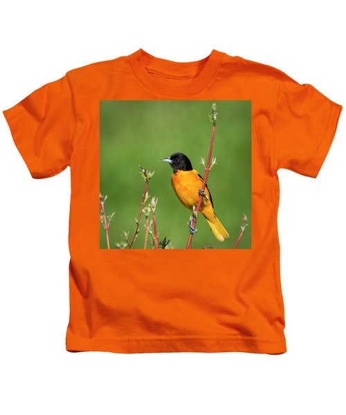 Male Baltimore Oriole Posing Kids T-Shirt