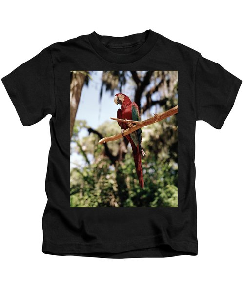 1960s Scarlet Macaw Parrot Perched Kids T-Shirt