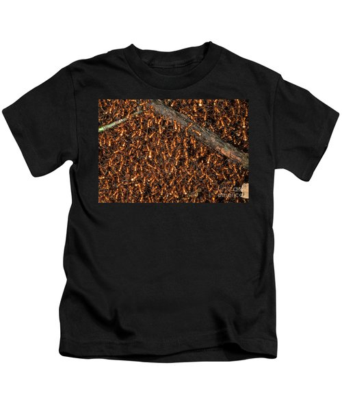 Army Ant Bivouac Site Kids T-Shirt by Gregory G. Dimijian, M.D.