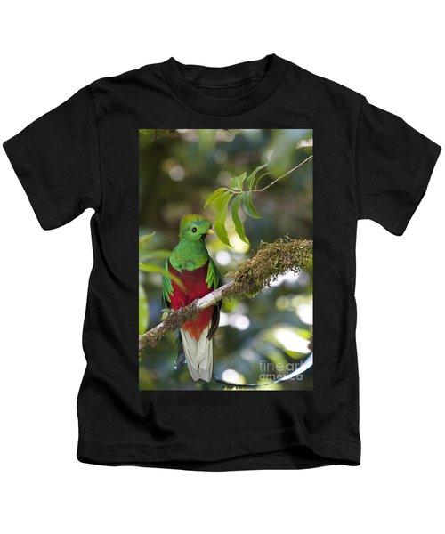 Beautiful Quetzal 1 Kids T-Shirt