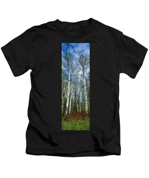 Birch Trees In A Forest, Us Glacier Kids T-Shirt