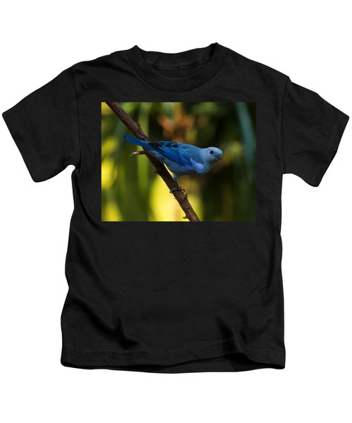 Blue Grey Tanager Kids T-Shirt