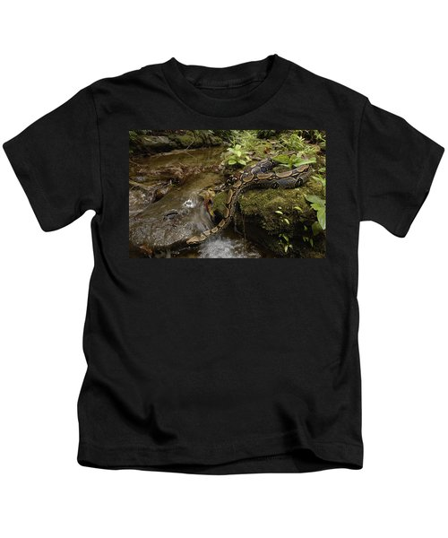 Boa Constrictor Crossing Stream Kids T-Shirt by Pete Oxford