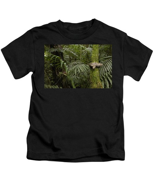 Boa Constrictor In The Rainforest Kids T-Shirt by Pete Oxford