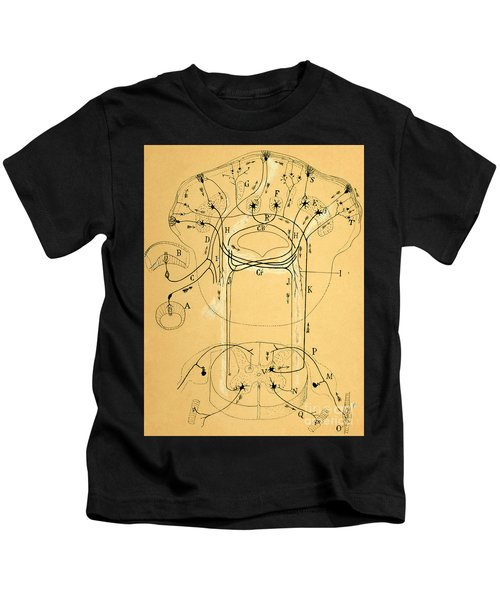 Brain Vestibular Sensor Connections By Cajal 1899 Kids T-Shirt
