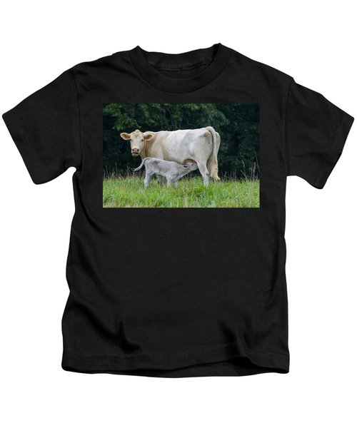 Charolais Cattle Nursing Young Kids T-Shirt