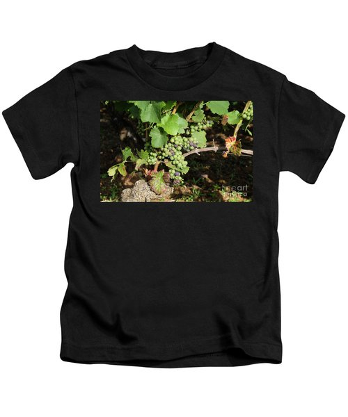 Grapevine. Burgundy. France. Europe Kids T-Shirt