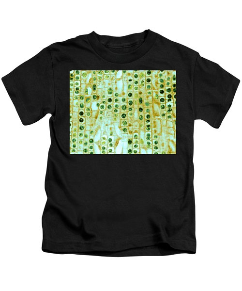 Hyacinth Root Tip Cells Kids T-Shirt