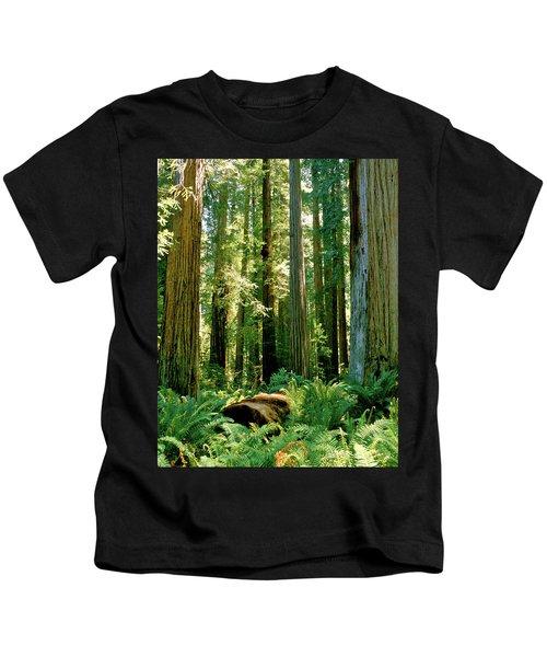 Stout Grove Coastal Redwoods Kids T-Shirt