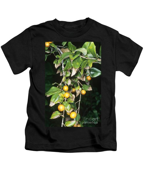 Strychnine Tree Leaves And Fruits Kids T-Shirt