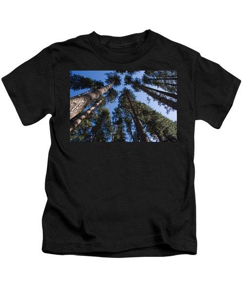Talls Trees Yosemite National Park Kids T-Shirt