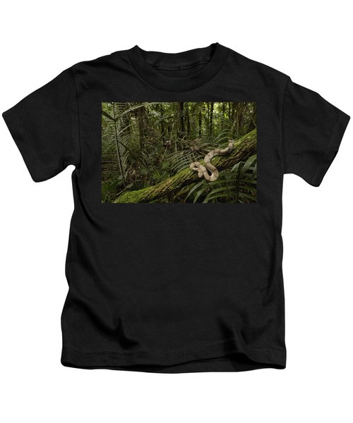 Boa Constrictor Boa Constrictor Coiled Kids T-Shirt by Pete Oxford