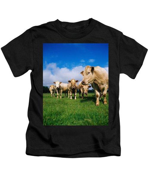 Cattle, Charolais Kids T-Shirt