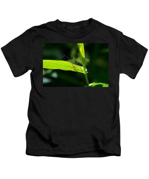 Itsy Bitsy Spider Kids T-Shirt