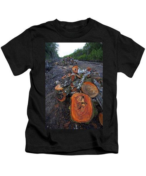 Logged Red Mangrove Rhizophora Mangle  Kids T-Shirt