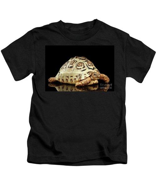 Closeup Leopard Tortoise Albino,stigmochelys Pardalis Turtle With White Shell On Isolated Black Back Kids T-Shirt