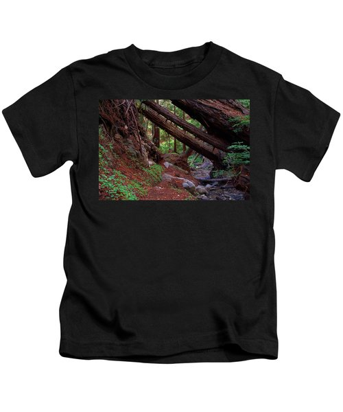 Big Sur Redwood Canyon Kids T-Shirt