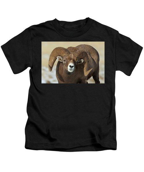 Bighorn Ram In Montana Kids T-Shirt