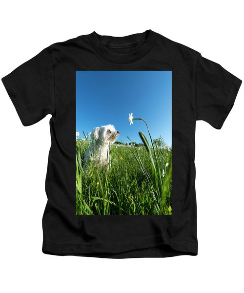 Blooming Daffodils In The Antola Park With Maltese IIi Kids T-Shirt