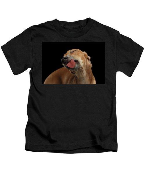 Closeup Cute Italian Greyhound Dog Licked With Pleasure Isolated Black Kids T-Shirt