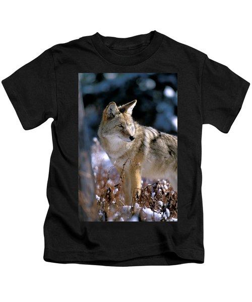 Coyote In Winter Light Kids T-Shirt