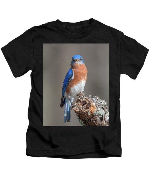 Eastern Bluebird Dsb0300 Kids T-Shirt