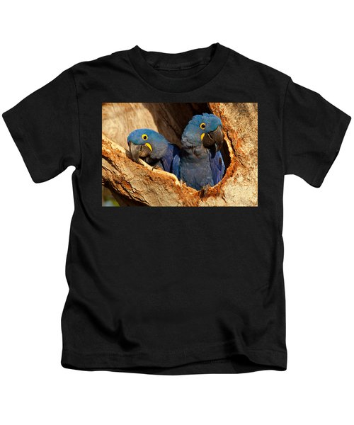 Hyacinth Macaw Pair In Nest Kids T-Shirt