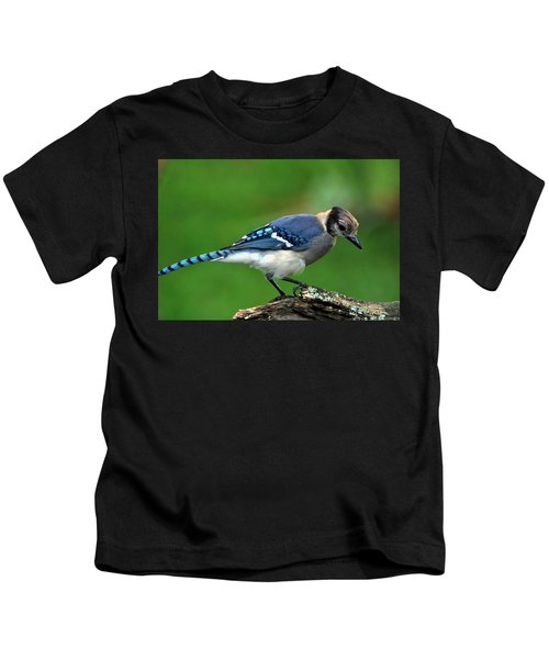 Juvenile Blue Jay  Kids T-Shirt