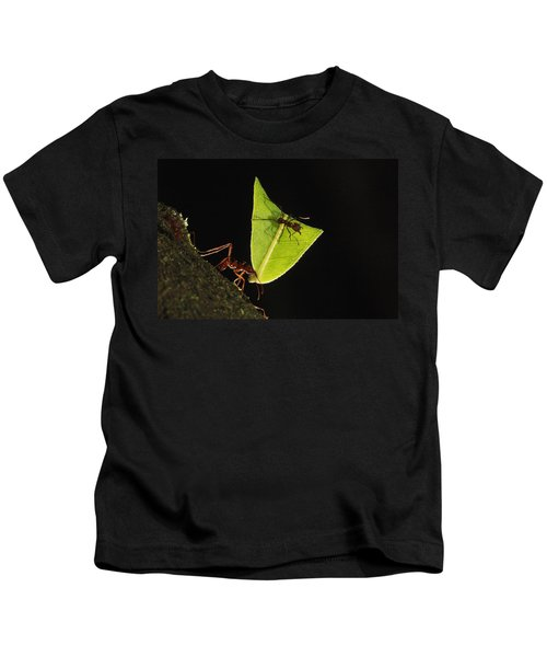 Leafcutter Ant Atta Sp Carrying Leaf Kids T-Shirt by Cyril Ruoso