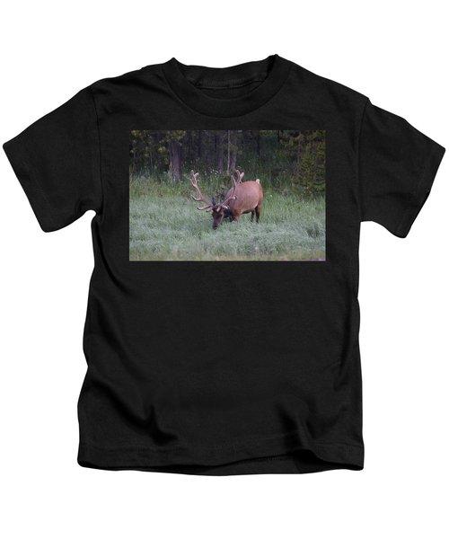 Bull Elk Rocky Mountain Np Co Kids T-Shirt