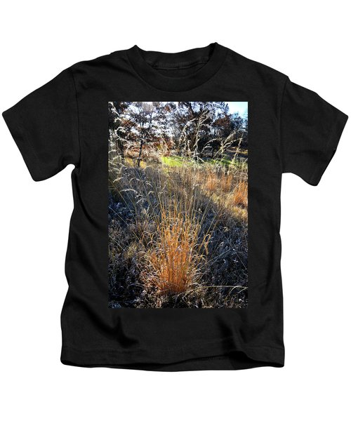 Morning Sun Backlights Fall Grasses In Glacial Park Kids T-Shirt